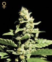 GREEN-O-MATIC